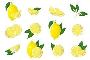 ensemble d'illustrations avec des agrumes exotiques de citron, des fleurs et des feuilles isolées sur fond blanc. vecteur