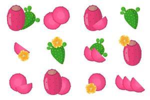 ensemble d'illustrations avec des fruits exotiques de figues indiennes, des fleurs et des feuilles isolées sur fond blanc. vecteur