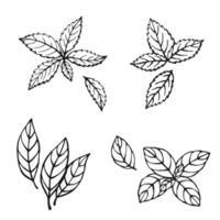 menthe dessinée à la main, feuilles de laurier, basilic vert, basilic rouge. éléments de conception isolés sur blanc. icônes de cuisine. illustration vectorielle vecteur