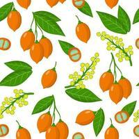 Modèle sans couture de dessin animé de vecteur avec bunchosia argentea fruits fruits exotiques, fleurs et feuilles sur fond blanc