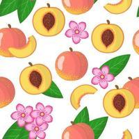Modèle sans couture de dessin animé de vecteur avec prunus persica ou fruits exotiques de pêche, fleurs et feuilles sur fond blanc