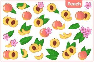 ensemble d'illustrations de dessin animé de vecteur avec des fruits exotiques de pêche, des fleurs et des feuilles isolés sur fond blanc