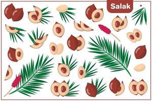 ensemble d'illustrations de dessin animé de vecteur avec des fruits exotiques salak, des fleurs et des feuilles isolés sur fond blanc