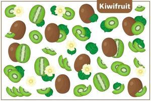 ensemble d'illustrations de dessin animé de vecteur avec des fruits exotiques de kiwis, des fleurs et des feuilles isolés sur fond blanc