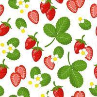 Modèle sans couture de dessin animé de vecteur avec fragaria vesca ou fleur de fruits exotiques fraise sauvage et feuille sur fond blanc