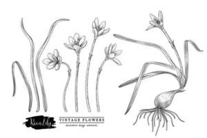 croquis ensemble décoratif floral. dessins de fleurs de lys de pluie. noir et blanc avec dessin au trait isolé sur fond blanc. illustrations botaniques dessinées à la main. vecteur d'éléments.