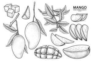 ensemble d'éléments dessinés à la main mangue illustration botanique vecteur