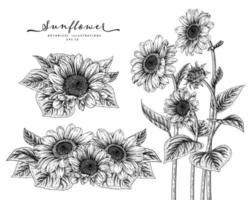 croquis ensemble décoratif floral. dessins de tournesol. noir et blanc avec dessin au trait isolé sur fond blanc. illustrations botaniques dessinées à la main. vecteur d'éléments.