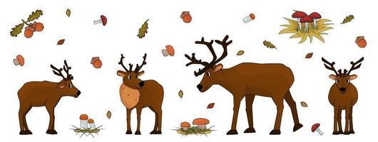 Ensemble de cerfs isolés de dessin animé mignon dessinés à la main avec des bois ou du caribou, des champignons, des feuilles, de l'herbe, des agarics de mouche, des cèpes, des champignons de tremble, des glands, des feuilles de chêne sur fond blanc vecteur