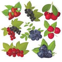 ensemble de baies de vecteur isolé. myrtilles, groseilles, cerises, fraises, mûres, framboises. dessin animé plat