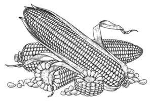 ensemble d & # 39; illustration dessinée à la main de maïs vecteur
