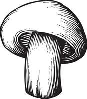 Champignon champignon - vintage gravé vecteur