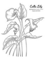 fleur de lys calla et feuille illustration botanique dessinée à la main avec dessin au trait sur fond blanc. vecteur