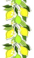 bordure transparente de branches de citron sur fond blanc vecteur