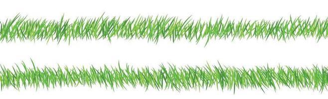 herbe juteuse verte sur fond blanc vecteur