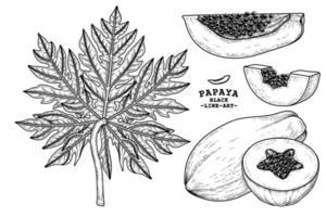 ensemble d'éléments dessinés à la main de fruits de papaye illustration botanique vecteur