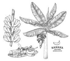bananier fruit et fleur illustration rétro dessinée à la main vecteur