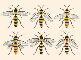Divers types d'illustration vectorielle Hornet vecteur