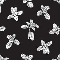 modèle sans couture de basilic. herbes italiennes. un brin de marjolaine. le basilic est un assaisonnement parfumé et parfumé. illustration dessinée à la main vecteur