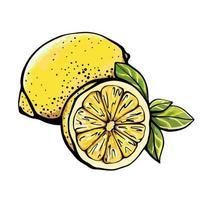 citron isolé sur fond blanc vecteur