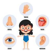 concept de cinq sens avec des organes humains vecteur