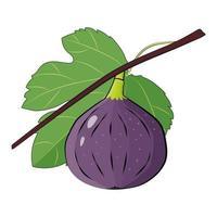 branche de figue fruit violet avec feuille vecteur