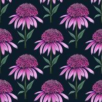 motif floral sans soudure botanique dessiné à la main avec timbre d'échinacée vecteur