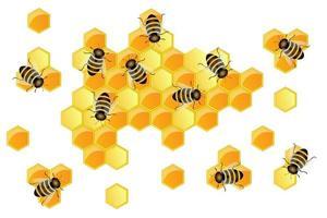 Image vectorielle du contour des continents et des continents sous forme de nids d'abeilles vecteur