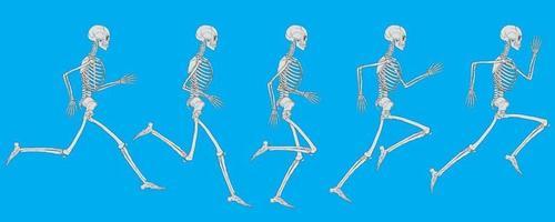 Cycle de fonctionnement du squelette humain blanc sur dessin vectoriel fond bleu