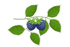 illustration de fruits sucrés de mûre pour le web isolé sur fond blanc vecteur