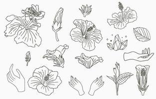 collection de fleurs en ligne avec hibiscus vecteur