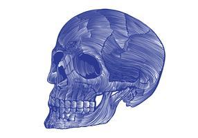 squelette linogravure vecteur