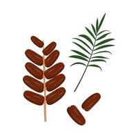 dattes et branche de palmier doux dessert délicieux ou collation une source de vitamines un produit exotique vecteur