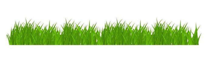 Élément de décoration de carte de voeux herbe et bordure isolé sur fond blanc vecteur