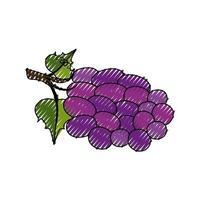 icône de grappe de raisin vecteur