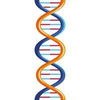 molécule d'ADN orange vecteur