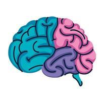 couleurs des organes du cerveau vecteur