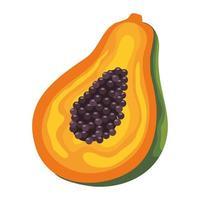 papaye fruits frais vecteur