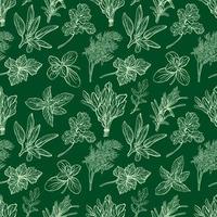 modèle sans couture d'herbes italiennes. motif de condiments et herbes provençales. cuisine méditerranéenne. illustration vectorielle dessinés à la main vecteur
