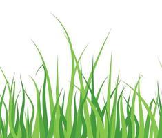 herbe verte sur fond blanc vecteur