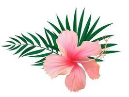 Fleur d'hibiscus rouge avec des feuilles de palmier isolé sur fond blanc vecteur