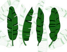 Illustration de feuilles de bananier vecteur