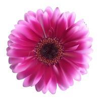 illustration vectorielle de gerbera fleur fond vecteur