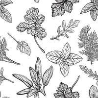 modèle sans couture d'herbes italiennes et provençales. motif d'assaisonnements et d'herbes méditerranéennes. illustration vectorielle dessinés à la main vecteur