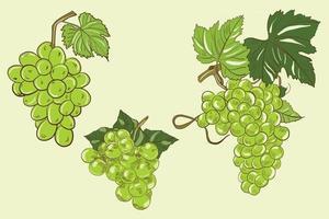 illustration vectorielle de grappes vertes de raisin avec des feuilles vecteur