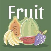 fruits frais exotiques tropicaux tels que le melon pêche kiwi vecteur