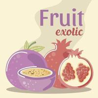grenade et fruit de la passion fruits frais exotiques vecteur