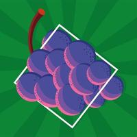 raisins frais alimentaires vecteur