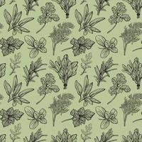 modèle sans couture d'herbes italiennes. illustration vectorielle dessinés à la main vecteur