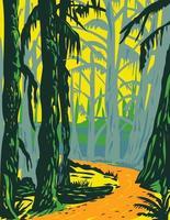 érable à grandes feuilles dans la forêt tropicale de hoh situé sur la péninsule olympique dans le parc national olympique de l'état de washington wpa poster art vecteur